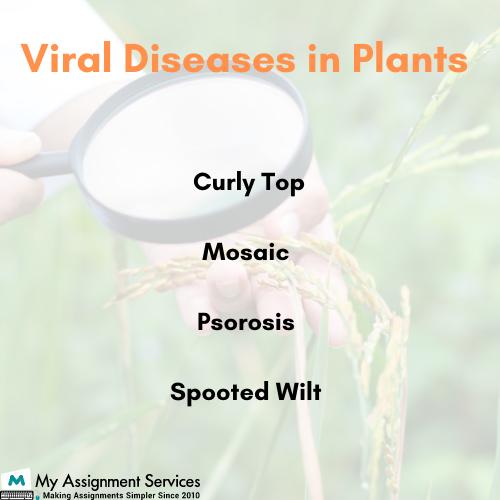 plant pathology dissertation help
