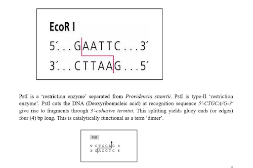 molecular medicine assignment sample