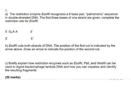 molecular medicine dissertation help