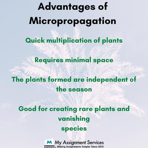 advantages of micropropagation