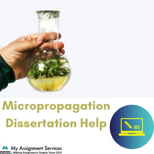 micropropagation dissertation help