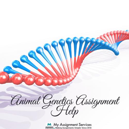 animal genetics assignment help