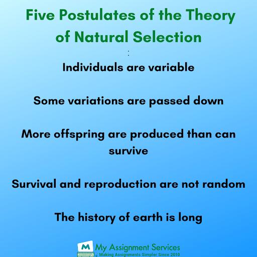 Natural Selection theory