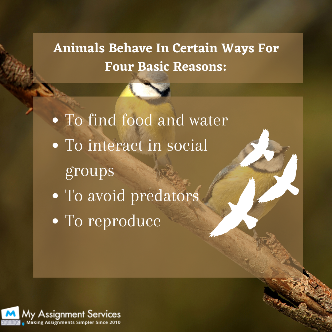 Animal Behavior Assignment Help