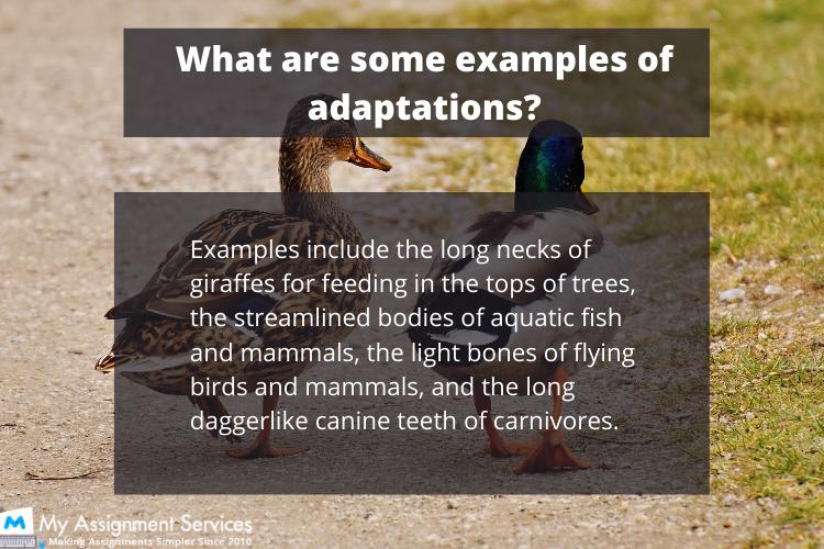 Animal Adaptations 1